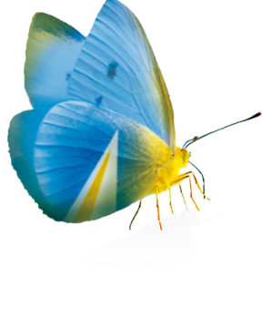 design-butterfly-with-clean-logo