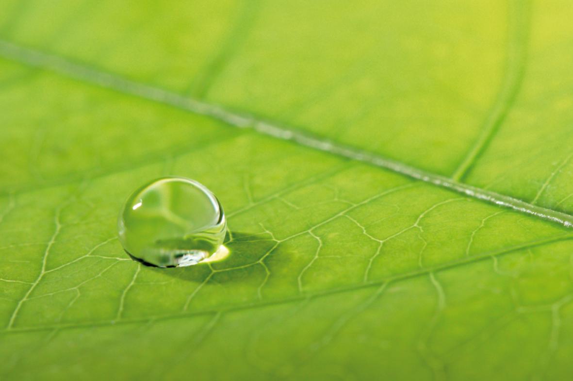 Wassertropfen auf einem gruenen Blatt cleanLASER